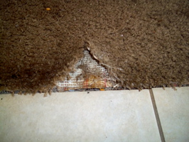 Damaged Carpet